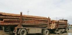 Особенности перевозки леса